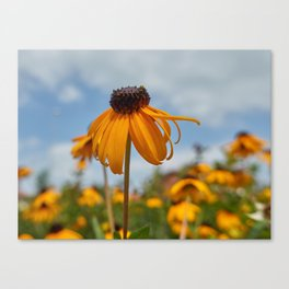 yellow rudbeckia flower in the garden Canvas Print