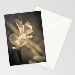 Trace of Spring Stationery Cards