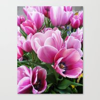 tulips Canvas Prints featuring tulips by Liudvika's Lens