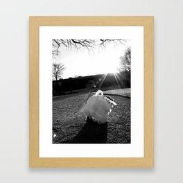curiousity. Framed Art Print