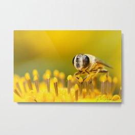 Pollen Feast Metal Print