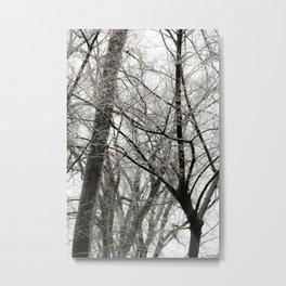 Winter Trees Metal Print