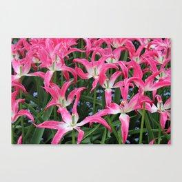 Spent Tulips Canvas Print