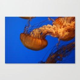 61010_jelly Canvas Print