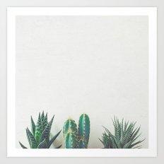 Cactus & Succulents II Art Print