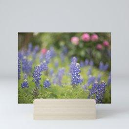 Texas bluebonnets Mini Art Print