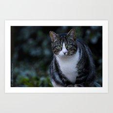 Green eyes cat Art Print
