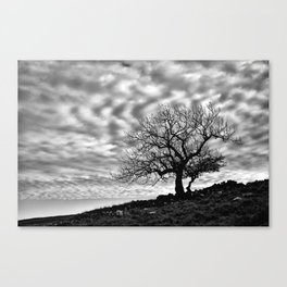 Lonely Tree with a mottled sky Canvas Print