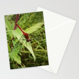 Red Meadowhawk Dragonfly Stationery Cards