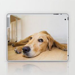 Labrador Retriever lying on the floor Laptop & iPad Skin