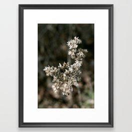 Buds Framed Art Print