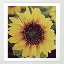 sunflower beauty no. 4 Art Print