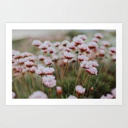 Pink Seaside Flora Art Print