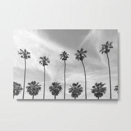 Palm Trees in La Jolla, California Metal Print