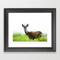 Roe Deer Buck 2 Framed Art Print