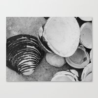 shells Canvas Prints featuring shells by Dantastic Photos