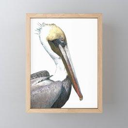 Pelican Portrait Framed Mini Art Print