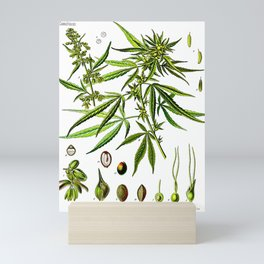 Cannabis Sativa - Koehler (1887) Mini Art Print