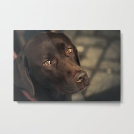 Waiting for the owner Metal Print