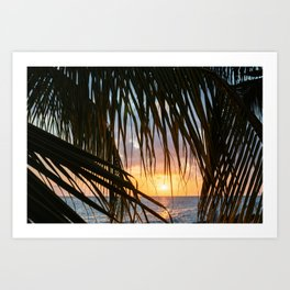 Palm Leaves with sun light shining through during golden hour   Photography print  Art Print