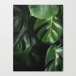 Tropical Monstera Leaves Wet Supple Foliage Dark Dense Forest Canvas Print