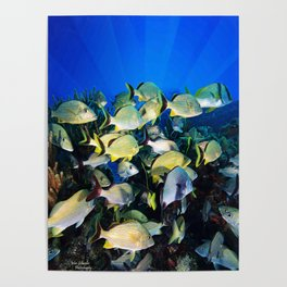 Underwater Photography by John Schwalbe Poster