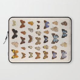 Vintage Scientific Insect Butterfly Moth Biological Hand Drawn Species Art Illustration Laptop Sleeve