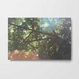 warm rays Metal Print