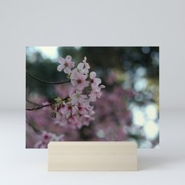 Blooming sacura Mini Art Print