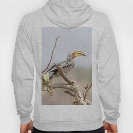 Yellow billed hornbill Hoody