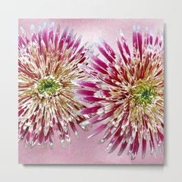 Double Aster 2 Metal Print