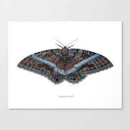 Black Witch Moth Canvas Print