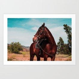 Blaze the horse color Art Print