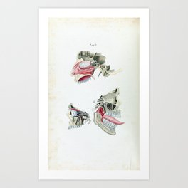 Vintage Anatomy of the Human Mouth and Tongue Art Print