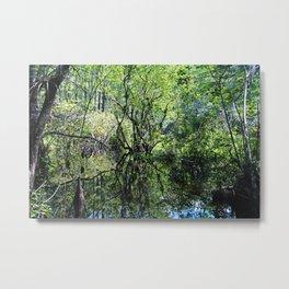 Swamp Song Metal Print