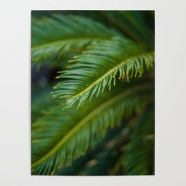 What the Fern Poster