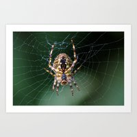 spider Art Prints featuring Spider by Dora Birgis