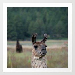 Llama Portrait - 1 Art Print
