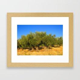 Olive Trees Framed Art Print