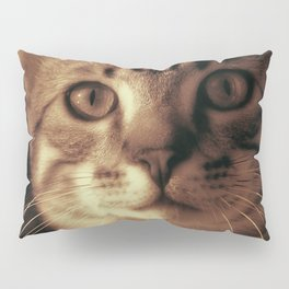 Kitten In The Window Pillow Sham