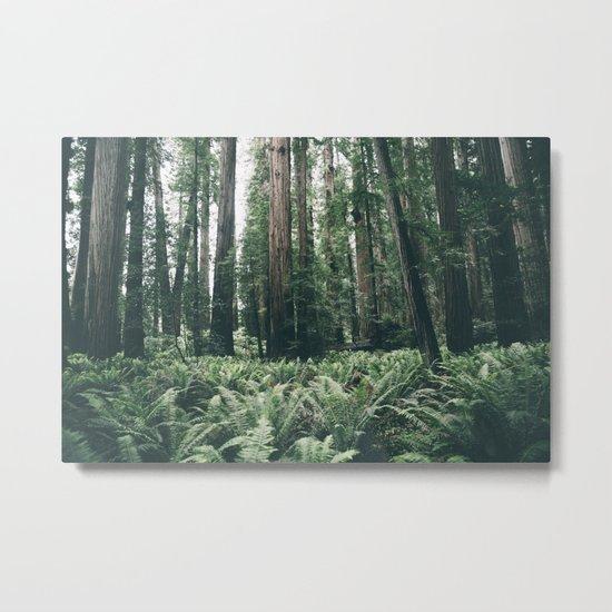 Forest XXV Metal Print