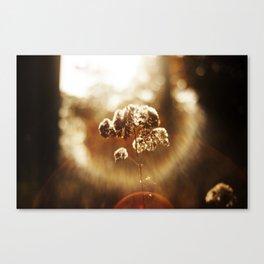 Autumnal Glow Canvas Print