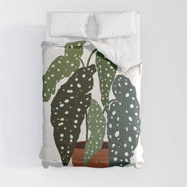 Cutest Polcadot Plant Begonia Maculata Comforters