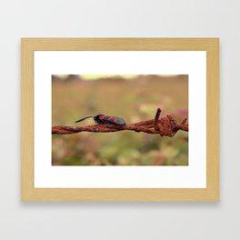 Six Spotted Burnet Framed Art Print