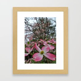 Dogwood. Framed Art Print