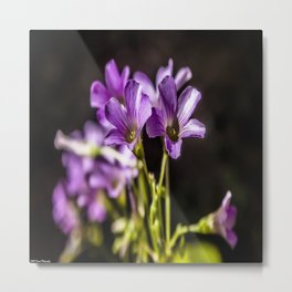 Springtime Blooms Metal Print