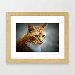 King of the Country Jungle Framed Art Print