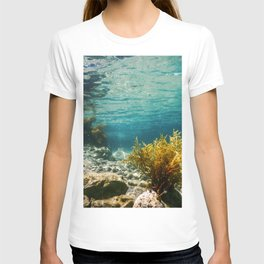 Forest of Seaweed, Seaweed Underwater, Seaweed Shallow Water near surface T-shirt