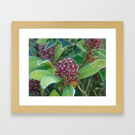 Holly I Love You Framed Art Print