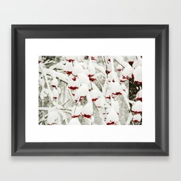 Red berries and snowy tree Framed Art Print